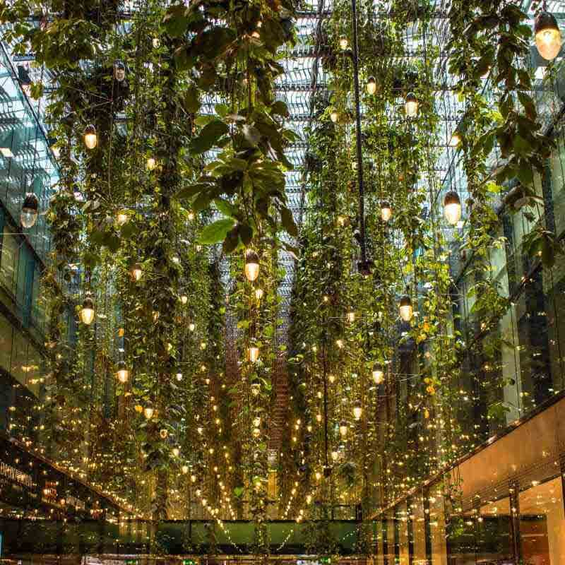 interior design biophilic design